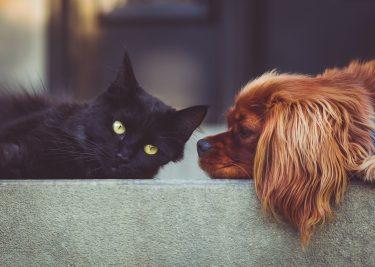Huisdieren aan boord